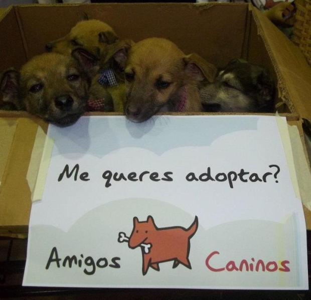 FOTO AMIGOS CANINOS