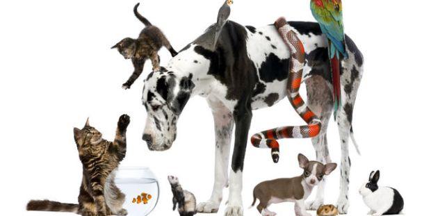 animal-animales-mascotas-getty_MUJIMA20130417_0010_32