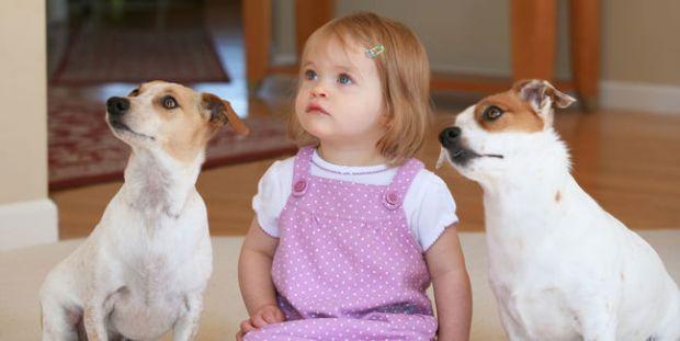 mascotas-perro-perros-getty_MUJIMA20121022_0026_31