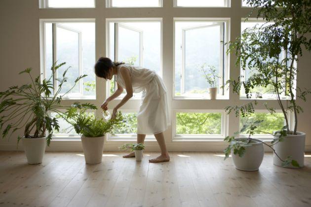 5 plantas de interior f ciles de cuidar namaste for Cuidar hierbabuena en interior
